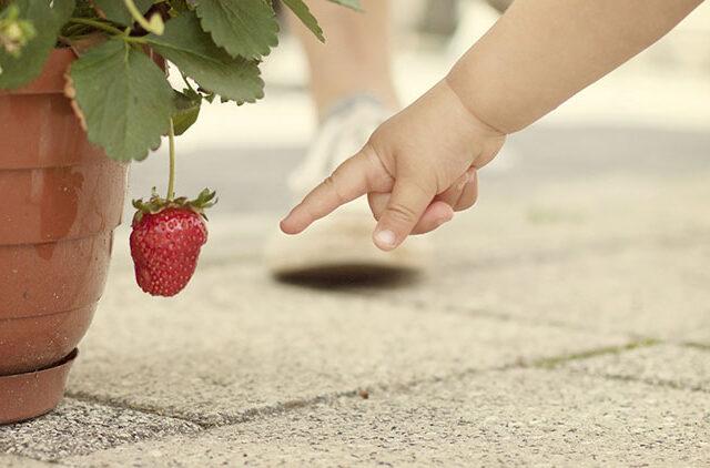 οικογένεια, παιδί, σχολείο, βάρος, φρούτα, λαχανικά