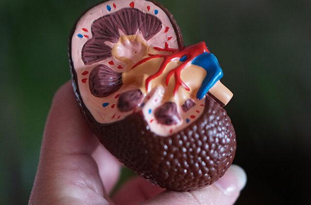 νεφρά, νερό, διαβήτης, αλάτι, ούρα, μεταβολισμός